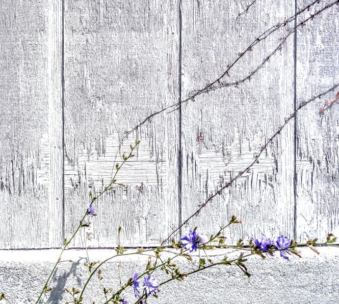 """""""Urban floral"""" von Kevin Dooley"""